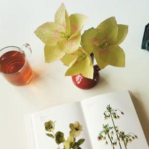 Helleborus van florist crêpepapier